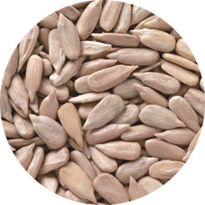 Sunflower seeds kernels